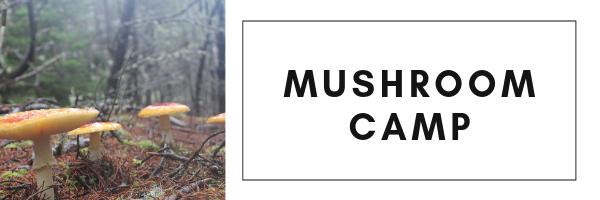 Mushroom Camp.png
