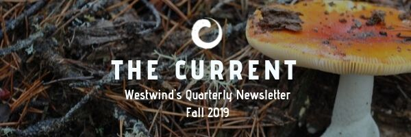 Fall 2019 Current Header.jpg