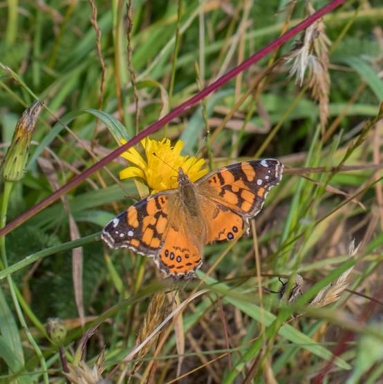 butterfly_from cascade head.jpg