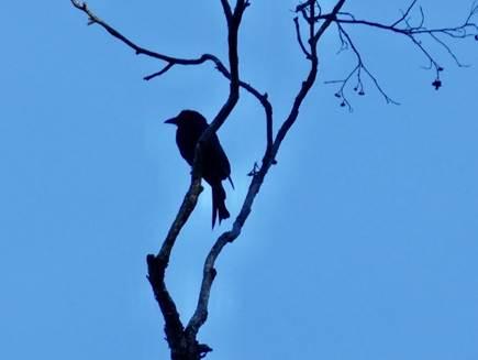 bird002.jpg